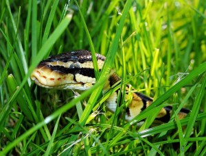 Two North Carolina Counties Most at Risk for Snake Bites